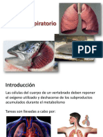 6.Sistema respiratorio vertebrados.pdf