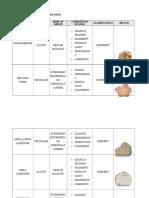 Identification of Sedimentary Rock