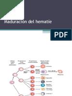 04 Estructura y Función Del Hematíe La Hemoglobina