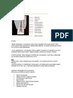Anatomia Radiografica Completa Part 1-0