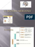 2-El Sistema Nervioso