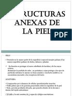 Estructuras Anexas de La Piel