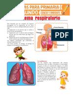 Sistema Respiratorio Para Segundo de Primaria