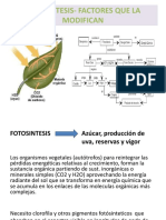 FOTOSINTESIS- FACTORES QUE LA MODIFICAN.ppt