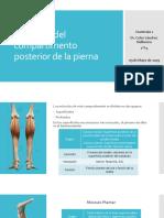 Compartimento Posterior de La Pierna (Copia)