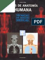 Anatomia Basica de Gray 1era Edicion