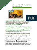 Consumir Cúrcuma Com Pimenta Preta Aumenta a Biodisponibilidade Da Curcumina