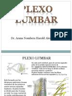 anatomiaplexolumbar-