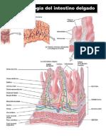 Fisiopatología intestinal.pdf