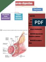 Fisiopatología Intestinal