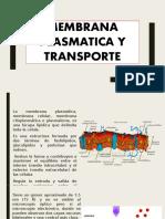 Membrana plasmatica esposicion