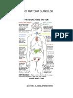 Endocrinologie curs 1 anatomia glandelor endocrine