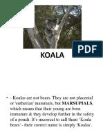 Koala Interesting Facts