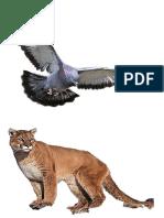 Paloma y Puma