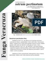 FUNGA VERACRUZANA Num.78 Geastrum pectinatum