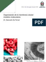 GDF_clase 10 Organizacion de La Membrana Celular - Modelos Moleculares-01