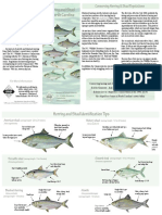 Herring Shad ID Guide Sm