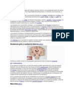 Cerebro Humanista de El