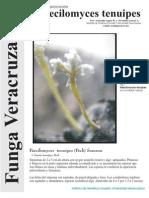 FUNGA VERACRUZANA Num.76 Paecilomyces tenuipes