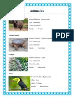 Album Animales y Planta
