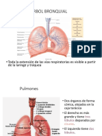 Pulmones.ppt