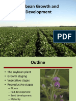 04 Soybean Growth and Development