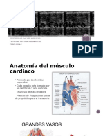 15. Músculo Cardiaco