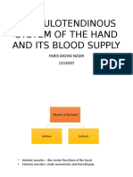 Musculotendinous System of the Hand and Its Blood