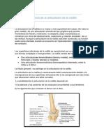 Anatomia de la articulación de la rodila