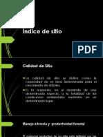 Productividad Forestal1