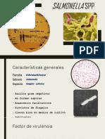 Salmonella spp1.pptx