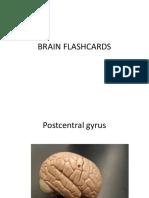 Brain Structure
