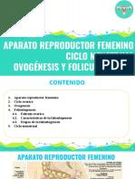ciclo mestrual, foliculogenesis y ovogenesis