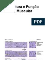 Estrutura e Funcao Muscular