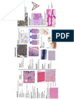 CT Histology