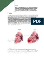 Organos Implicados en El Asma