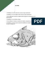Estudo Dirigido Cranio