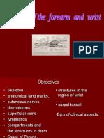 Anatomy of Forearm and Wrist