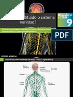 Dt9 Como é Constituído o Sistema Nervoso