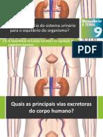 Dt9 Qual a Importância Do Sistema Urinário Para o Equilíbrio Do Organismo
