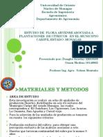 Estudio de Flora Arvense Asociada a Plantaciones De