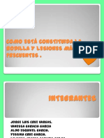 comoestconstituidalarodillaylesionesms-121006013509-phpapp01