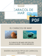EL CARacol de Mar