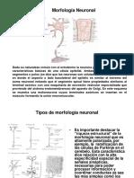 Sistema Nervioso Central y Sentidos especiales