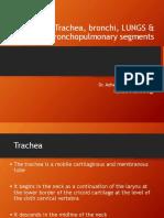 20-Trachea Bronchi & BPS
