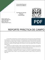 Report campo