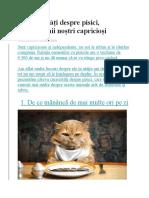 10 Curiozități Despre Pisici