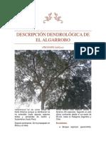 Descripción Dendrológica Del Algarrobo