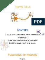 nerve cell pwp kon suay