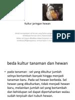 Kultur Jaringan Hewan2